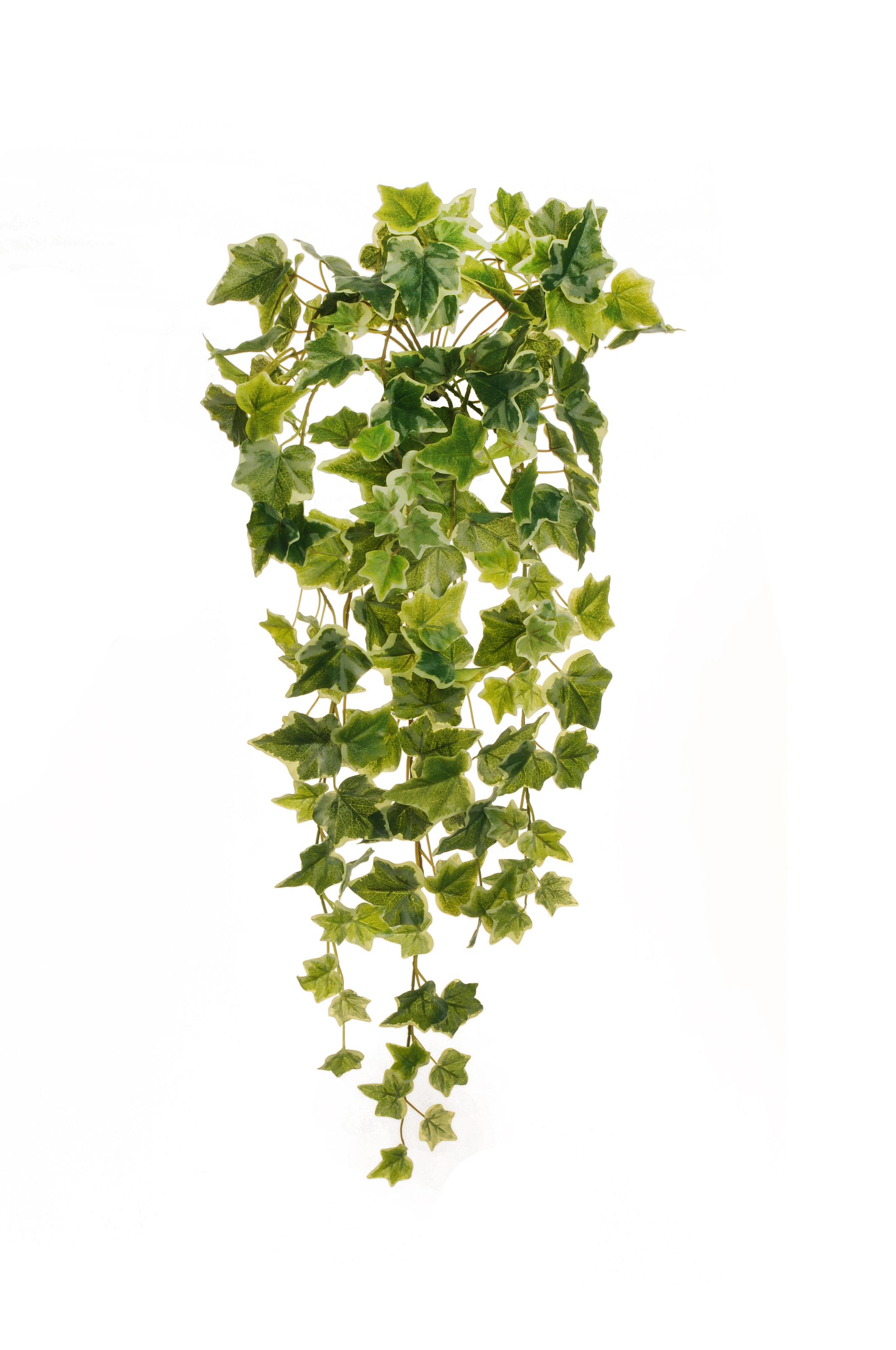 Edera cadente variegata for Piante rampicanti finte