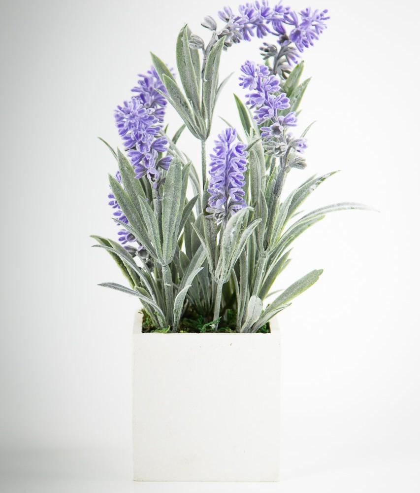 Pianta lavanda in vaso 28 images finta pianta di for Pianta lavanda in vaso